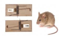 Pasti na myši 12 ks